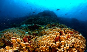 Human Impacts Changing Coral Reef Structures