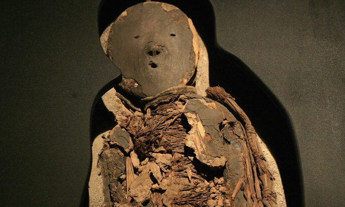 A Chinchorro mummy of a child - dated between 5000 B.C. and 3000 B.C. on display at San Miguel de Azapa Museum in Arica, Chile. During the past decade, many of the Chinchorro mummies have begun to rapidly degrade. (Claudio Santana/AFP/Getty Images)