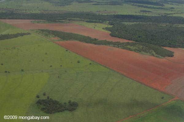 Rainforest fragments in a sea of soyfields in Mato Grosso, Brazil. Photo by Rhett A. Butler.