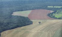 Brazil Confirms Rising Deforestation in the Amazon
