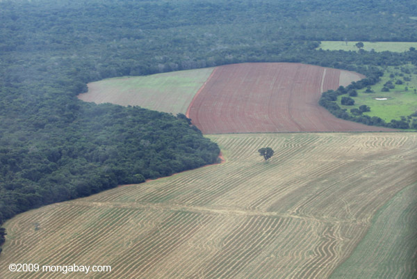 Remnant Brazil nut tree in a landscape cleared for soy fields. Photos by Rhett A. Butler