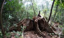 Proposed Law Could Decimate Indonesia's Remaining Forests