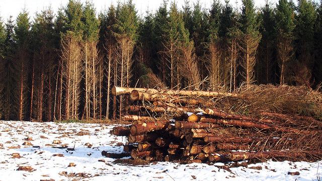 Is wood better than coal for carbon emissions? (Martijn van Sabben, CC BY-SA)