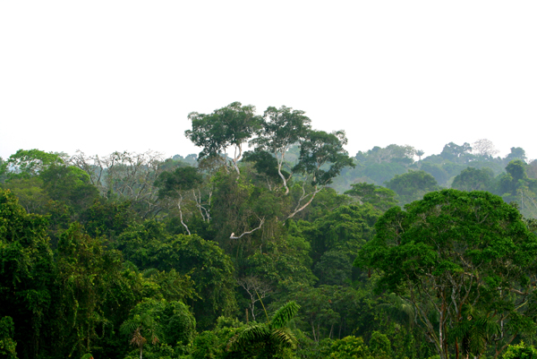View from observation tower in Yasuni National Park in the Ecuadorian Amazon. Photo by Jeremy Hance, mongabay.com.