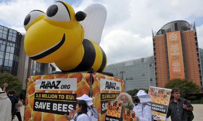 Beekeepers demonstrate to confront lawmakers at the EU headquarteras they decide to vote on whether to ban bee-killing pesticides, in Brussels on April 29,2013. (Georges Gobet/AFP/Getty Images)