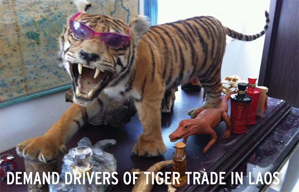 Stuffed tiger in Laos. Photo courtesy of EIA