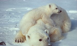 The Great Arctic Decline: Another Sea Ice Record Broken