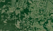 World's Fragmented Forests Are Deteriorating