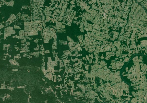 Fragments of forest in the agricultural landscape around Sinop, Brazil, an area where soybean farming and cattle ranching have expanded at the expense of the Amazon rainforest. Image courtesy of Google Earth.