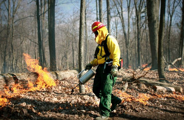 "The benefits of controlled burns may outweigh the costs, according to a survey of forest managers. As one manager said: ""Prescribed burning is the most important forest management tool we have.""  (vastateparksstaff, CC BY)"