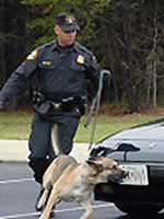 Secret Service Canine Explosives Detection Unit screens vehicles and event sites for explosives. (Courtesy U.S. Secret Service)