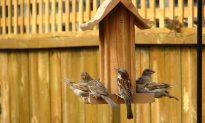 Villagers Highlight Bird Plight With Special Wedding