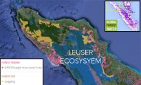 Forest in Indonesia Threatened by Logging and Plantations