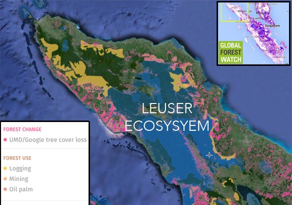 GLobal Forest Watch map showing protected areas and industrial concessions in and around the Leuser Ecosystem in Aceh and North Sumatra on the Indonesian island of Sumatra.