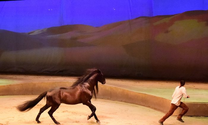 A scene from the equestrian show Cavalier currently visiting Hong Kong and performing daily between April 2 and May 10, 2015. (Bill Cox/Epoch Times)