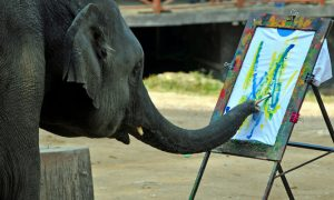 Can Animals Ever Be Artists?