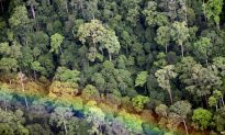 New Forest Protection Given a Chance By Low Crop Prices