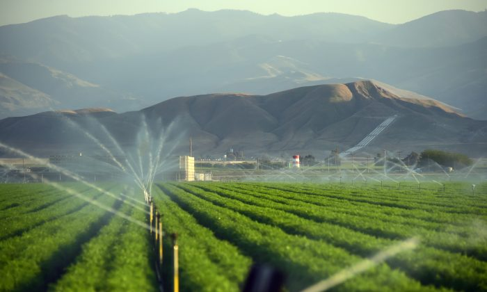 Fields of carrots are watered March 29, 2015 in Kern County, California.  (Frederic J. Brown/AFP/Getty Images)