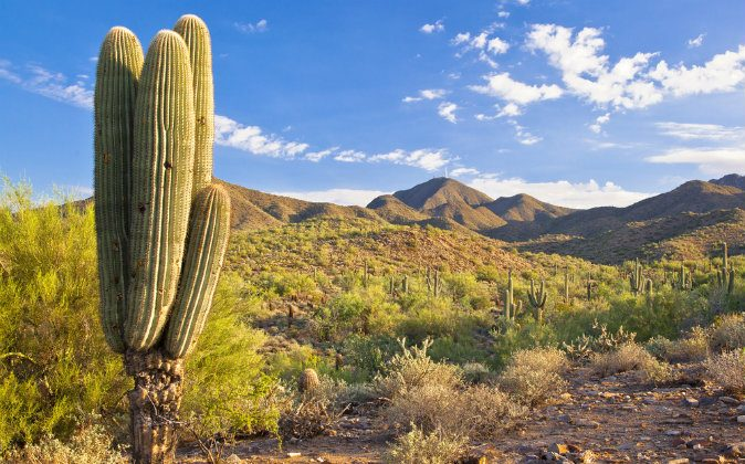 McDowell Mountains in Scottsdale, Arizona via Shutterstock*