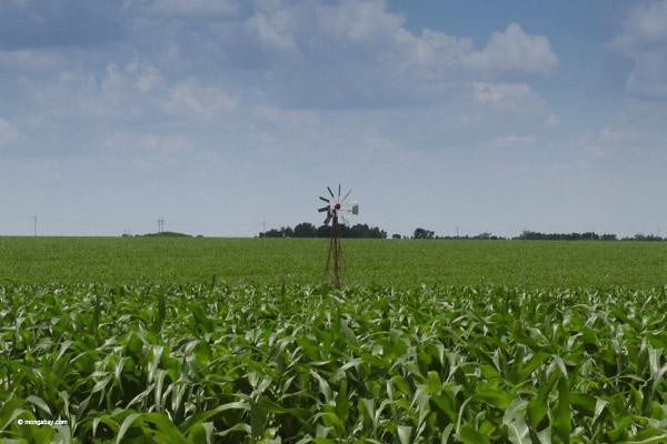 A cornfield stretches as far as the eye can see. Photo by Rhett A. Butler.