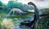 Why Brontosaurus Is No Longer a Dirty Word for Dinosaur Hunters