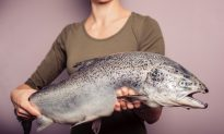 Petition Calls for More Deliberation for GMO Salmon
