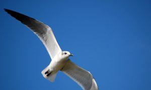 Surveys Put a Price Tag on Urban Birds