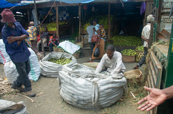 A trader sorts mangos at the Kilombero wholesale market in Arusha, Tanzania. Credit: Rachel Cernansky.