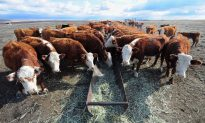 Beef Prices Projected to Keep Rising in 2015—but There's Good News