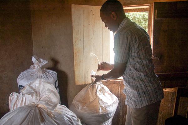 A researcher with the Swiss development organization Helvetas opens a polypropylene bag inside a farmer's storage room as part of a project testing the efficacy of various corn storage methods. Credit: Rachel Cernansky.