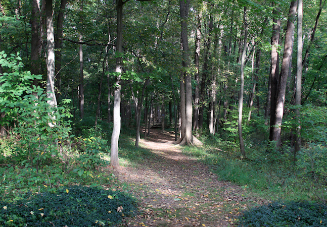 The thriving, beautiful forest behind Acorn Hall before Hurricane Sandy hit in 2012. (Courtesy of Morris County Historical Society)
