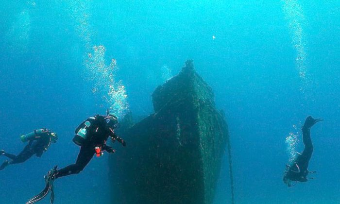 The 110' long Canadian built WW II tugboat was sunk as a memorial for Danny McCauley killed in a tragic automobile accident. His parents raised money to acquire and clean the derelict ship and Palm Beach County added funds to establish the reef in 75 feet of water.  (John Christopher Fine)