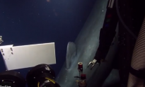 Deep-Sea Exploration Crew Stunned to See Rare Sperm Whale (Video)