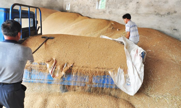 Chinese farmers store wheat after harvesting in Zouping, Shandong province in Northeast China on June 13, 2012. (STR/AFP/Getty Images)