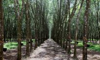 Deforestation Driven by Demand for Natural Rubber