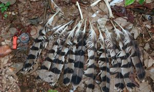 Commercial Bushmeat Hunting Pressuring Birds in Africa