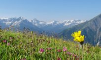 The Best Times of Year to Travel to the French Alps