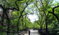 More Money Means More Trees in US Cities