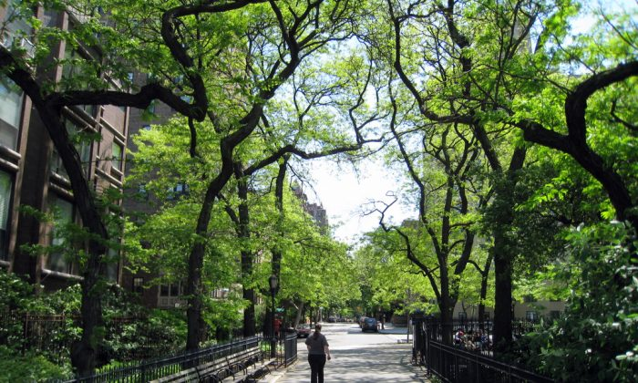 Tree-lined street in Brooklyn, NYC (Eric Mueller/Flickr/CC BY-SA 2.0)
