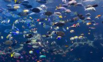 Ocean Contributes $2.5 Trillion to Economy Annually