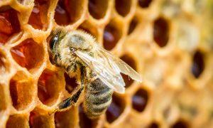 7 Health Benefits of Bee Propolis