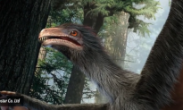 Winged Dinosaur Discovered in China (Video)