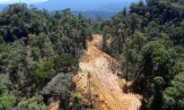 Selective Logging Leaves More Dead Wood in Rainforests