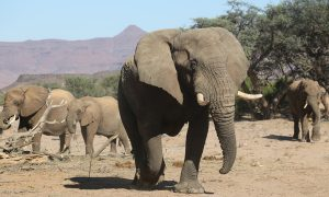 Reducing Crop Damage and Elephant-Human Conflicts
