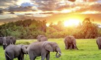 South Africa: A Top Destination in 2015