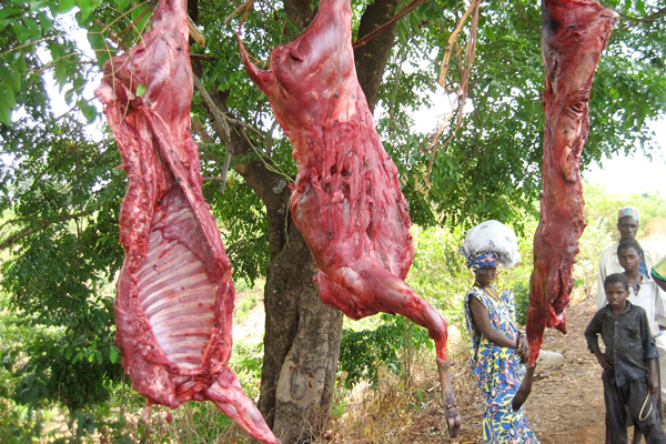 Hunting may be the single greatest threat to the world's endangered megaherbivores. Skinned antelope for sale in Guinea, Africa. Photo by: Terry Sunderland for Center for International Forestry Research (CIFOR).