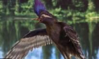 Modern Birds' Oldest Known Ancestor Found in China (Video)