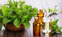 Peppermint Oil: A Potent Oil With the Power of Menthol