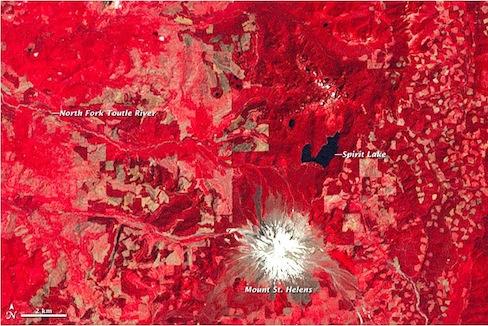 Vegetation on Mount St. Helens (red) in 1979. (USGS)