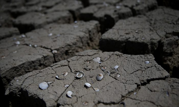 Shells remain on dry cracked earth that used to be the bottom of an irrigation ditch on April 24, 2015 in Firebaugh, California. (Justin Sullivan/Getty Images)
